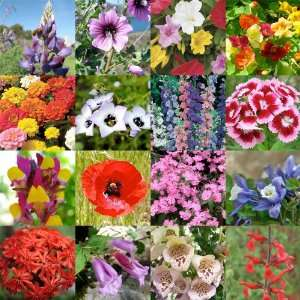 2,000 Seeds, Wildflower Mixture Bird & Butterfly (16 Species) Seeds
